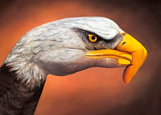 Eagle Guido Daniele