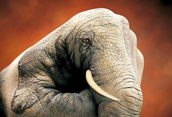 Elephant Guido Daniele
