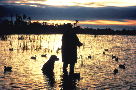 duck-hunting-dogs-1