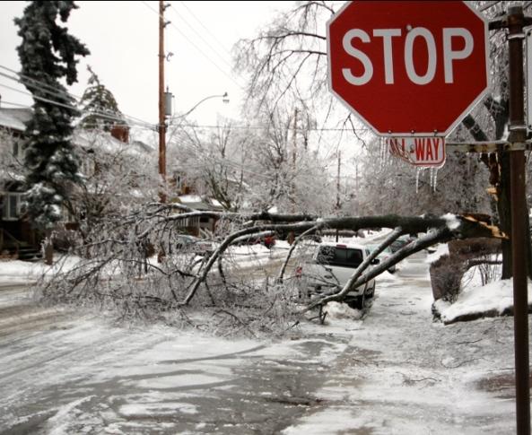 Toronto Ice Storm 1 (Roozbeh Rokni)