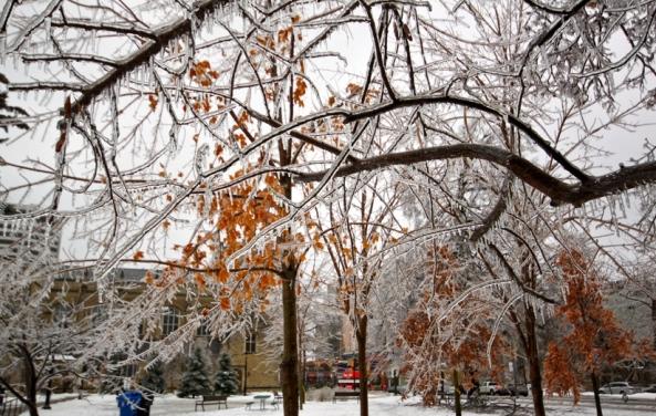 Toronto Ice Storm 3 Roozbeh Rokni