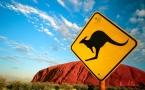 Kangaroo at Ayers Rock