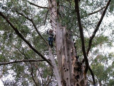 Karri Tree Fire Lookout