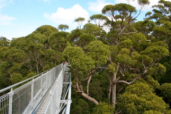 Tingle Forest Tree Top Walk