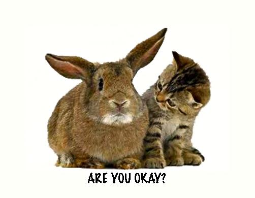 Bunny & Kitten