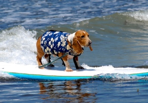 Cool surfing