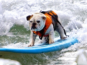 Serious Surfing