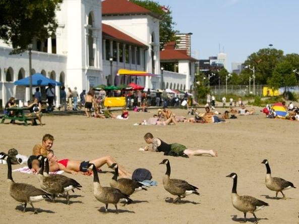 Sunnyside is their Beach too