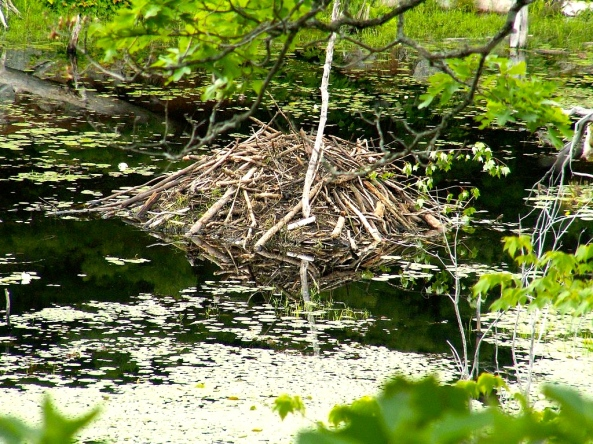 Beaver Lodge, northern Ontario