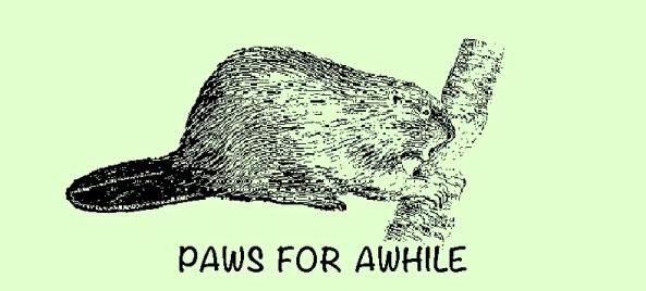 Beaver - Paws For Awhile 2