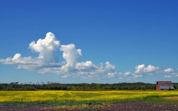 Prairie near Rathwell, Manitoba (R.Wiebe)