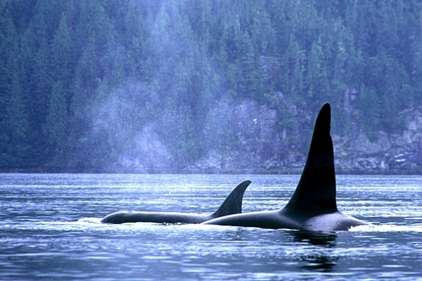 Whale Watching along British Columbia's coastline