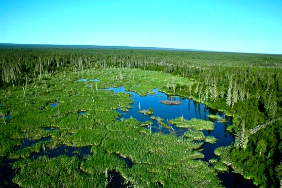 World's largest Beaver Dam at Wood Buffalo National Park, Alberta