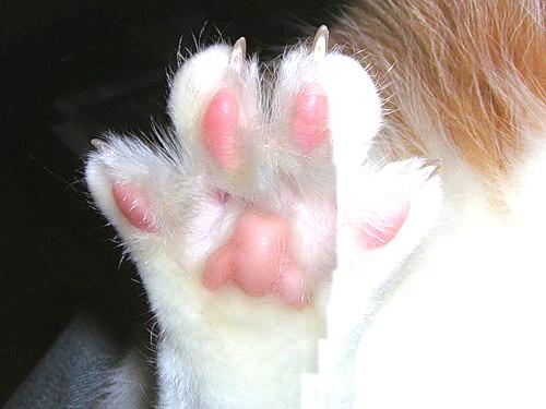 Hamster paw