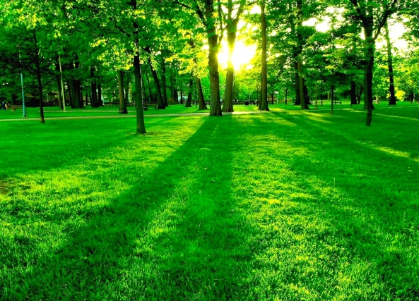 lush-green-nature-wallpapers-17