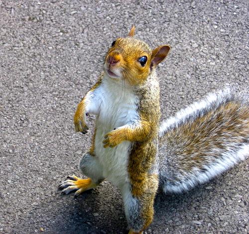 Squirrel paws