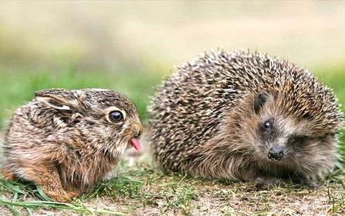 bunny and hedgehog