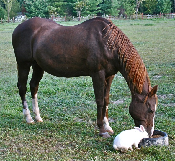 Bunny and Horse