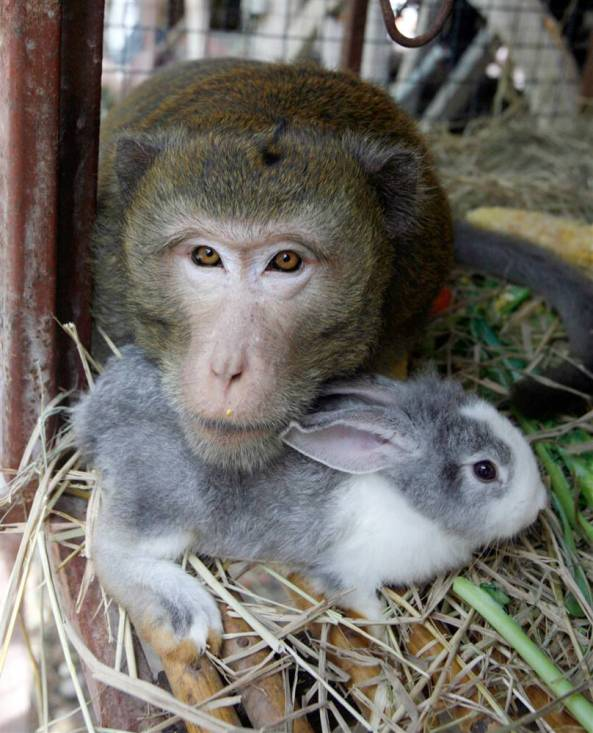 bunny and monkey