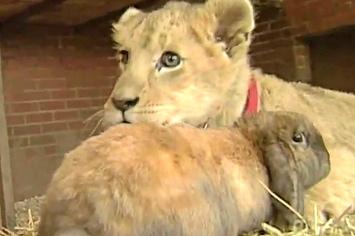 Bunny and Simba lion cub