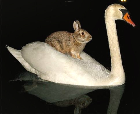 Bunny and Swan