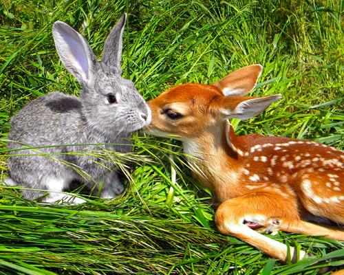 Bunny Ben and fawn Bambi (Svetlana Harper)