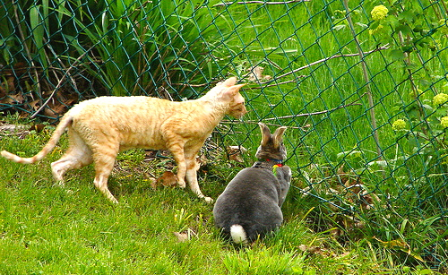 Bunny Rex and cat in Hobbitland