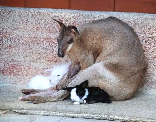 rbunny and wallaby (mygratefulness)