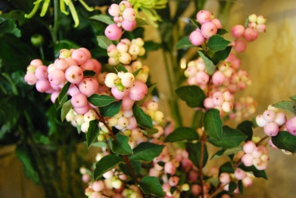 pink snowberry