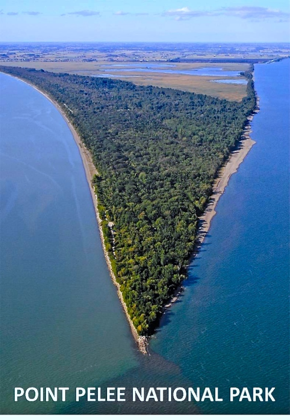 POINT_PELEE