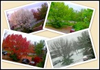 Four Seasons from Sundar M on flickr (1)