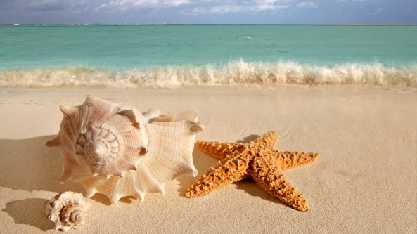 beach-seashells-1