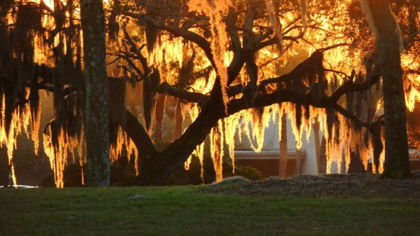 Sunrise through the Spanish Moss on Live Oak trees. Bradenton, Florida by jamee at WunderPhotos