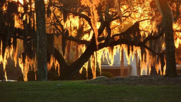 Sunrise through the Spanish Moss on Live Oak trees. Bradenton, Florida by jamee at WunderPhotos
