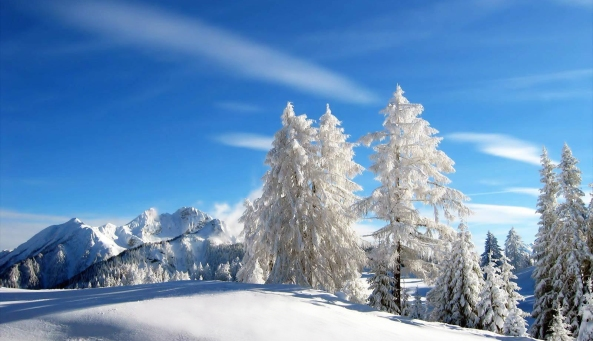 Winter Snow Flagstaff Arizona
