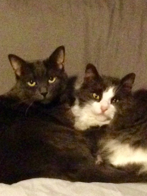 Bagerah & Fluffy , from son-in-law's second sister's family