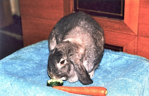 """Their second """"wilderness rescue"""" bunny Pepper."""