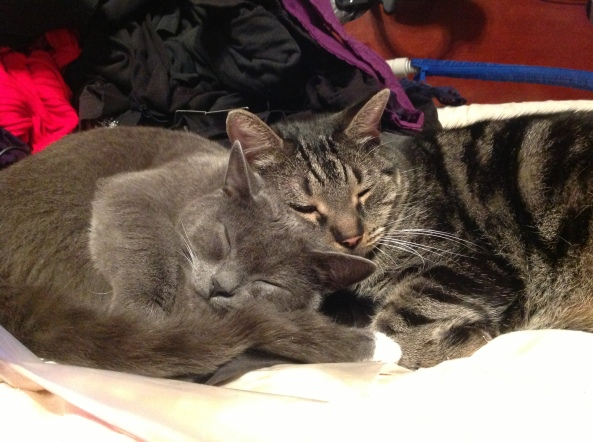 My daughter's friend's beautiful cats Wellington and Keiren